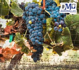 malla-antipajaro-antibirds-tenax-vinicola-ensenada-dmagromallas-dmtecnologias-1