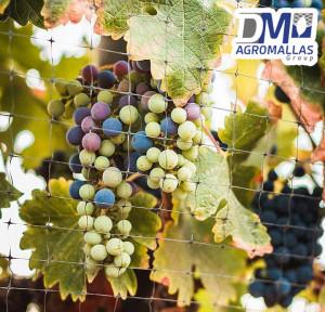 malla-antipajaro-antibirds-tenax-vinicola-ensenada-dmagromallas-dmtecnologias-13