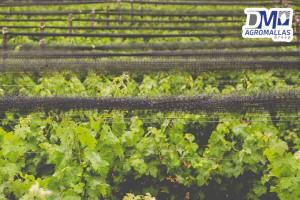 malla-antipajaro-antibirds-tenax-vinicola-ensenada-dmagromallas-dmtecnologias-9