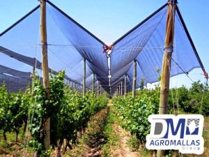MALLA-ANTIGRANIZO-AGRICOLA-PROTECCION-DE-CULTIVOS-GRANIZO-DMTECNOLOGIAS-DM-AGROMALLAS-1