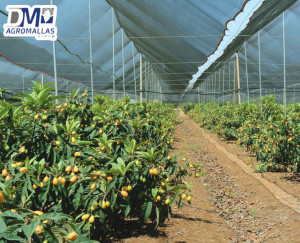 MALLA-ANTIGRANIZO-AGRICOLA-PROTECCION-DE-CULTIVOS-GRANIZO-DMTECNOLOGIAS-DM-AGROMALLAS-8